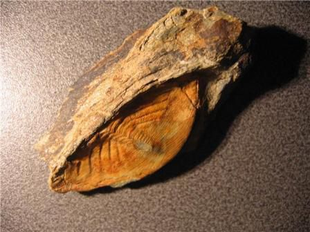 pygidium nobiliasaphus, ordovicien, château gaillard, bain,