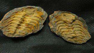 selenopeltis bain de bretagne 2