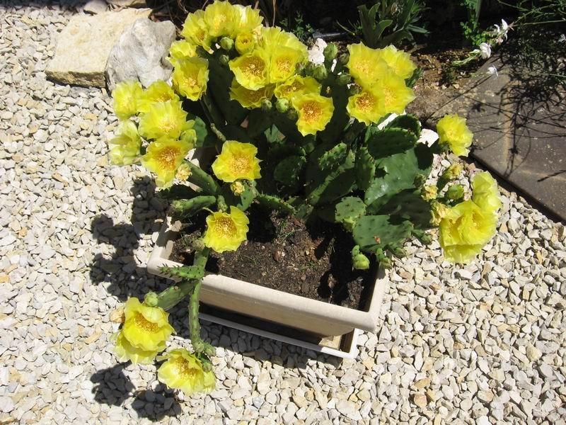 post-1744-0-48147200-1303491034_thumb.jp