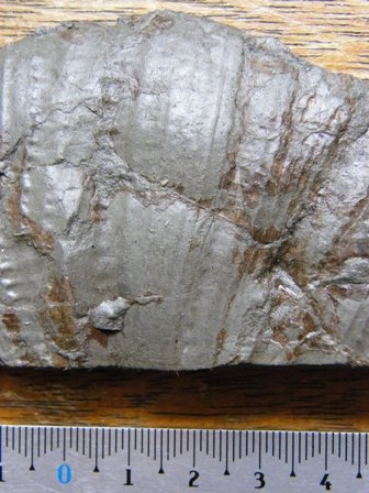 Fossile du toarcien dans les environ de essey les nancy for Code postal essey les nancy