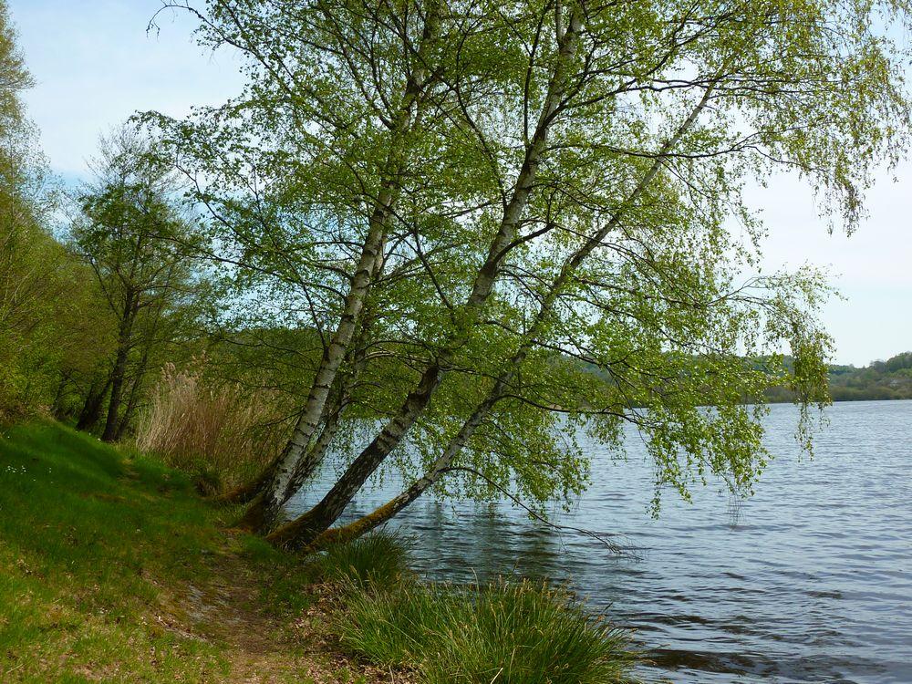 Lac de Chamboux 024.jpg