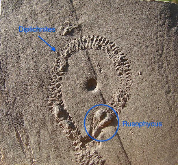 fossiles_09gwef1jsmd6w55kar7y.jpg