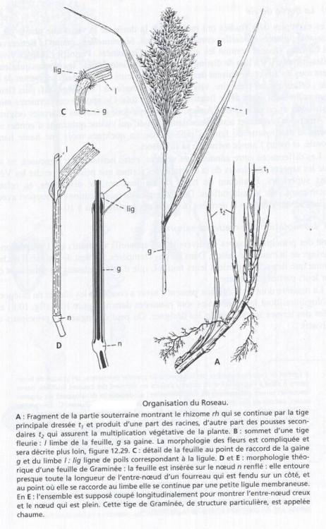 scan0014-1.jpg