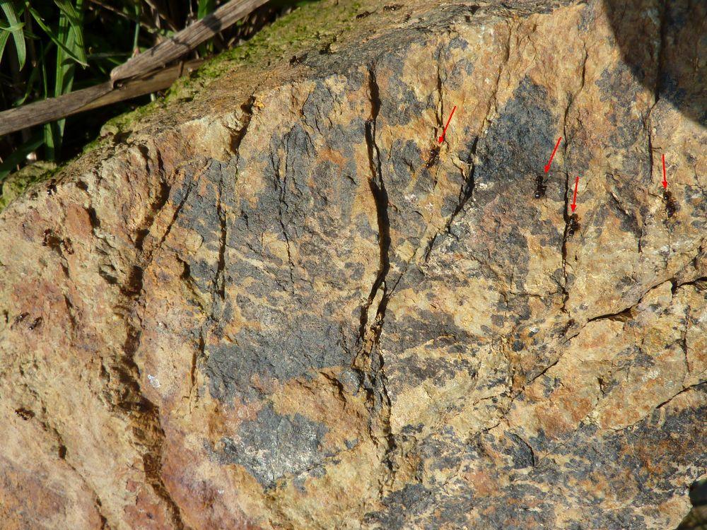 dendrites sur roche 4.JPG