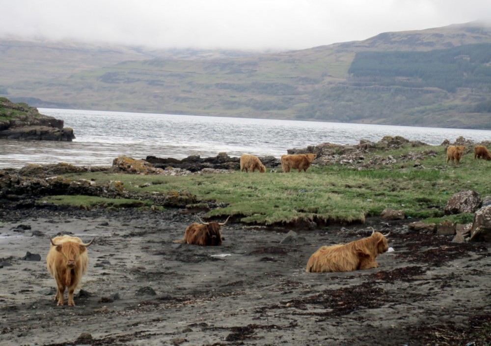 Mull, Loch Schridain.jpg