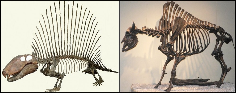 6pelycosaur-Dimetrodon-annarbor2363a.jpg