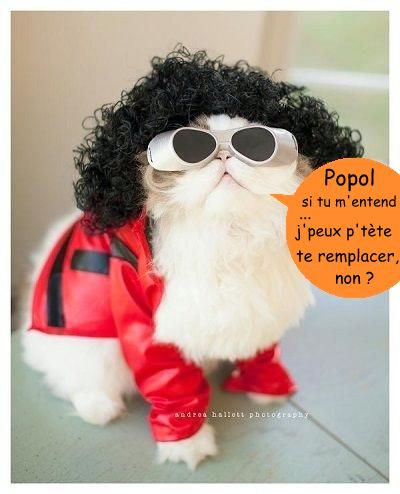 chat-roi-de-la-pop-r-default.jpg