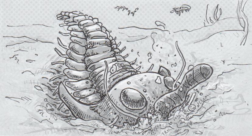 02-25-16-Trilobite.png