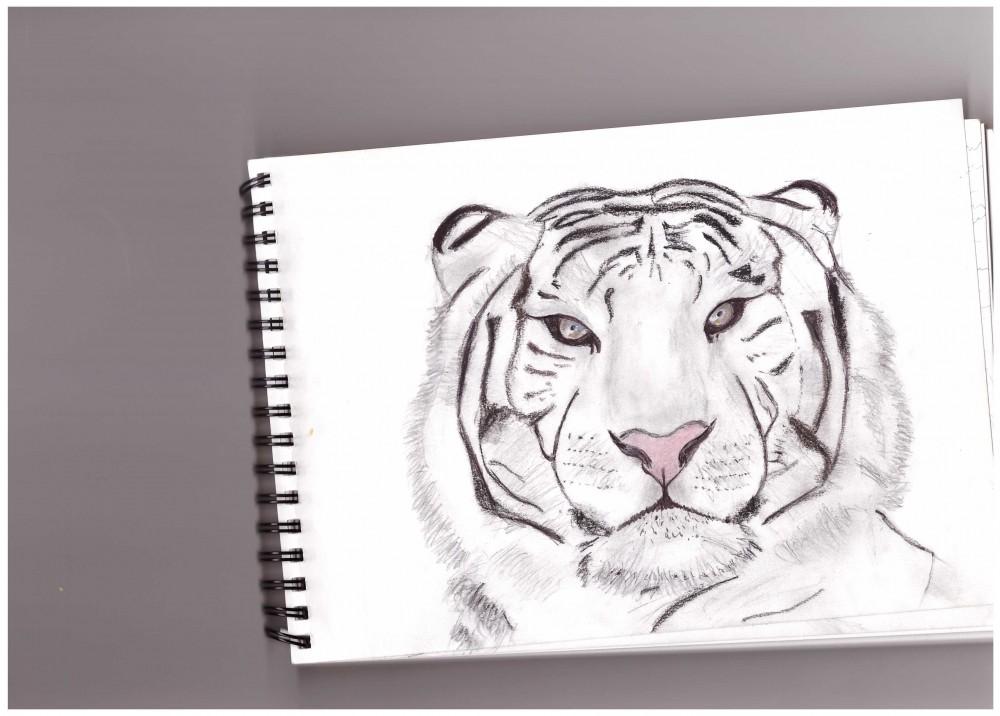 Tigre 3.jpeg