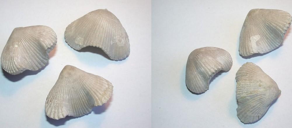 brachio9.jpg