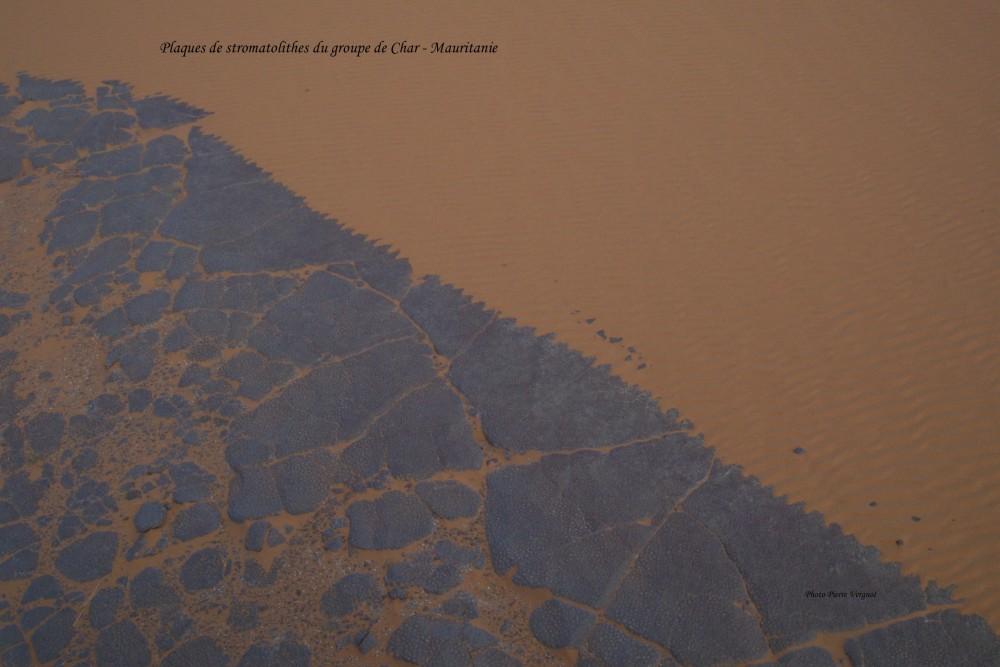 Plaques de stromatolithes.jpg