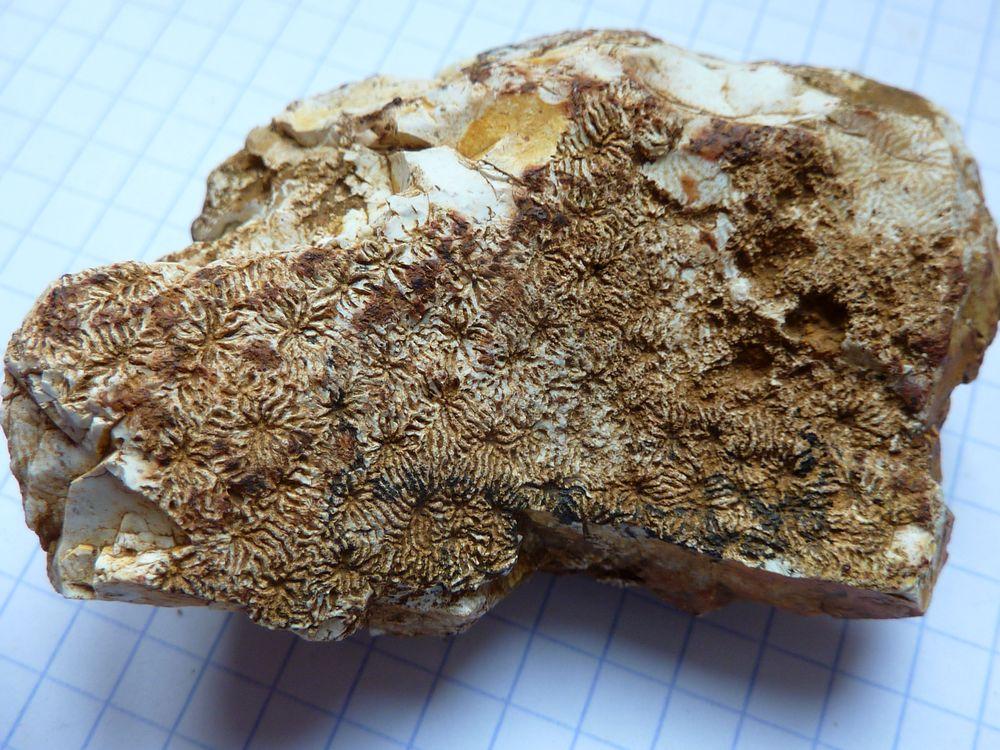 coraux 1.JPG