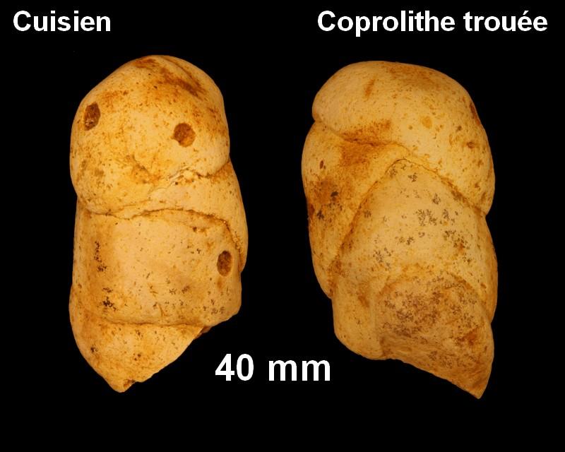 coprolithe_trouee_cuisien.jpg