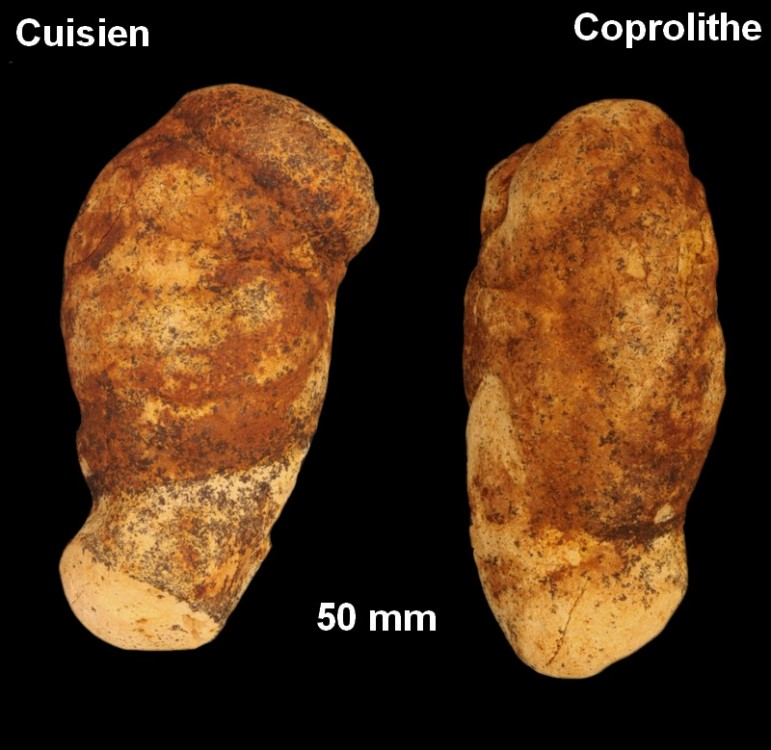 coprolithes_cuisien1.jpg