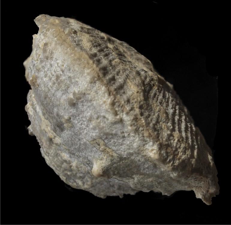 58cd1b0baa98e_Fossileluttien13.thumb.jpg.bf396399254ca0b662e323ee5f95be0b.jpg
