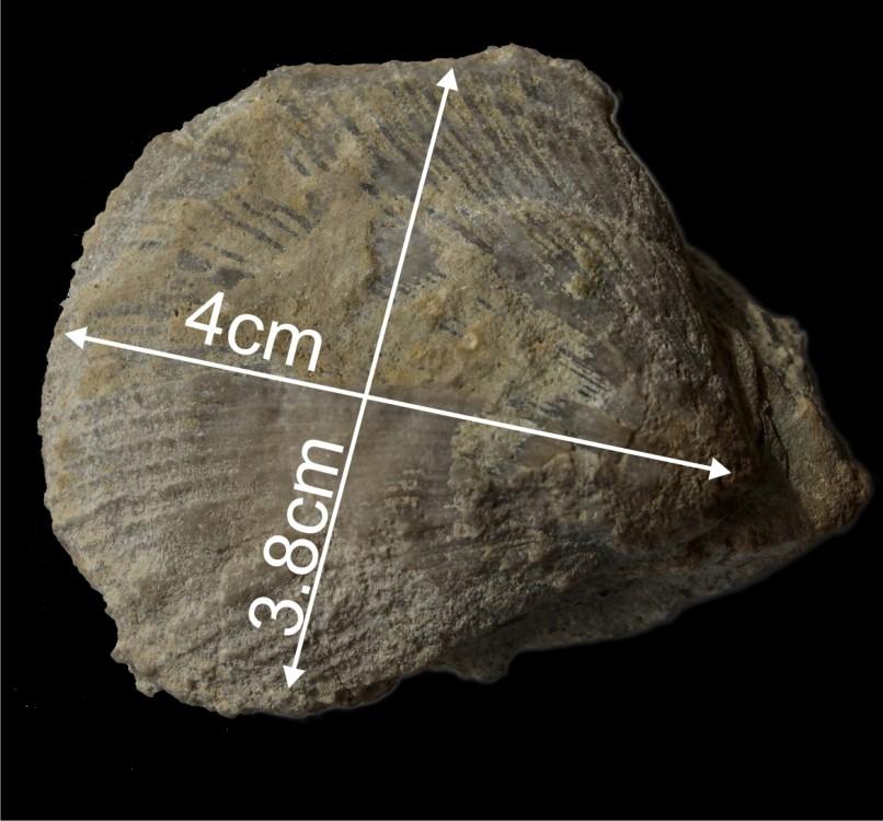 58cd1b19017aa_Fossileluttien12.thumb.jpg.ece1e0c84fe69dddbe1bf62c75a81e4b.jpg