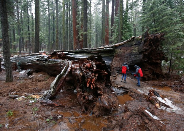 drive-thru-sequoia_5.jpg