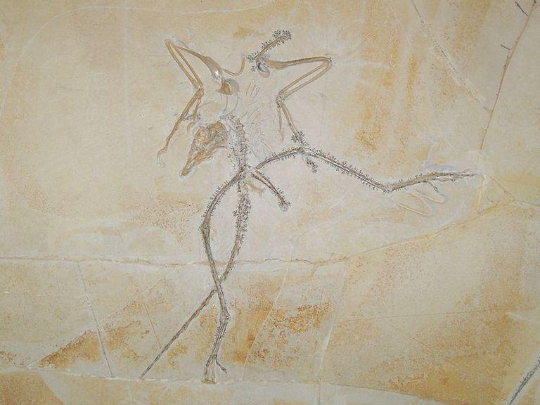 ArchaeopteryxTH-56a254465f9b58b7d0c91b93.jpg