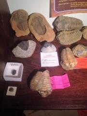 Trilobites divers