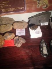 Trilobites et autres