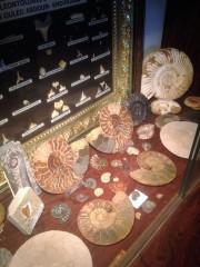Partie ammonites