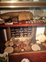Partie ammonites entière