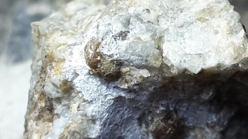 ammonite grenat1.jpg