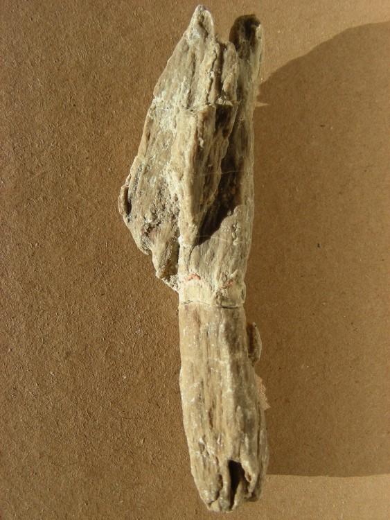 598b05eaed1dd_10Campanien_bois_fossile.thumb.jpg.f349e9ba337da17b4225bba58951053d.jpg