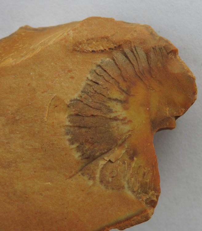 Artefact Mauprevoirr.jpg