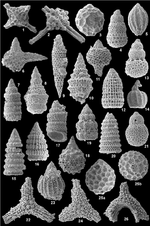 Fig-4-Late-Jurassic-and-earliest-Cretaceous-radiolarians-from-the-Imamzadeh-II-section.png