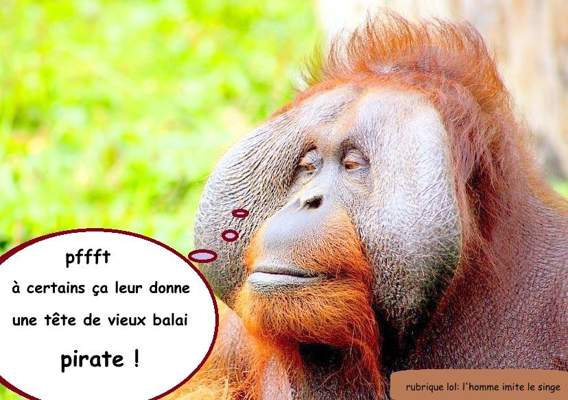 1-1-1-1-1-monkey-428032_960_720-002.jpg