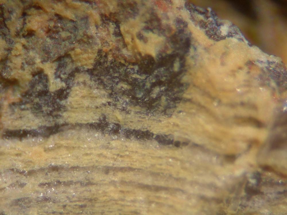 5a9573acb626a_Hot-spring-deposits-N6-siliceous-sinter-laminae-Franceville-basin-Gabon-5.thumb.jpg.e6caffa870626c4b6a276226c1a17dd7.jpg