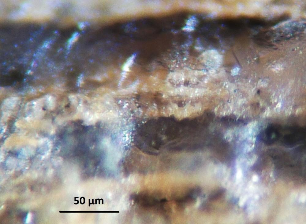 5a957890f3580_Hot-spring-deposits-N6-siliceous-sinter-laminae-Franceville-basin-Gabon-40.thumb.JPG.9f64d52c5cb21f946f1d37deb58bd13d.JPG