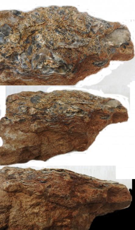 Calcaire à huitre2.jpg