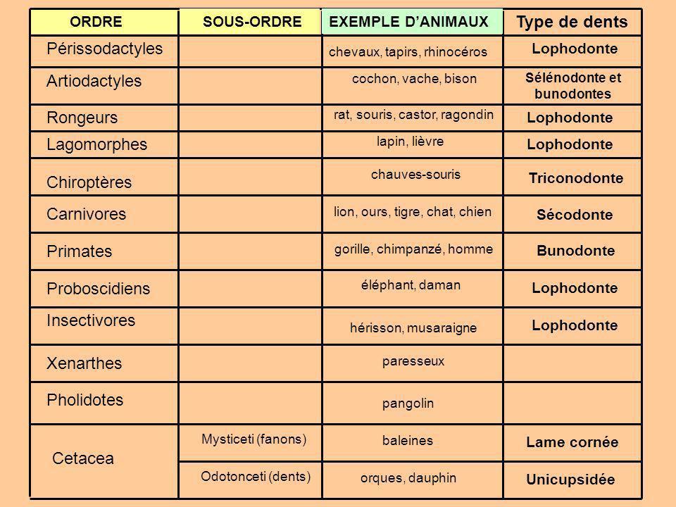 Sélénodonte+et+bunodontes.jpg