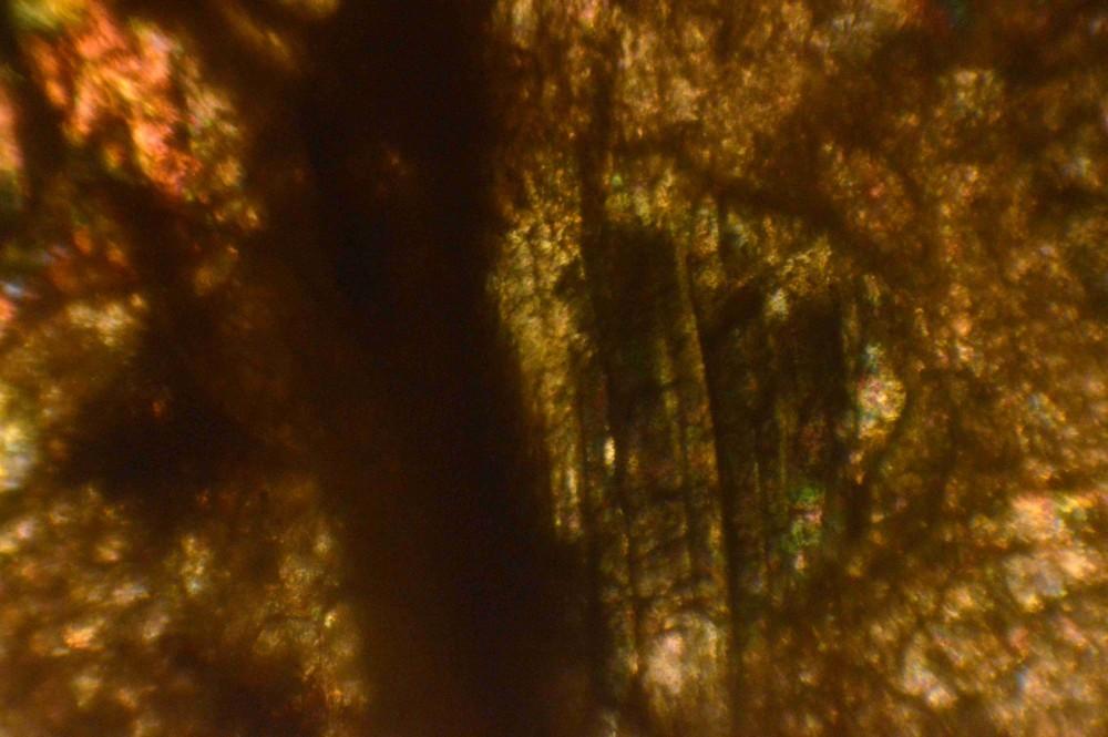 pyré005l.jpg