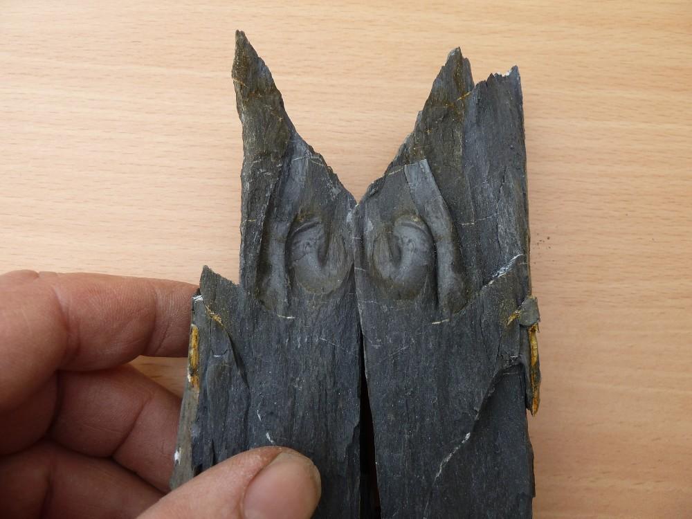 Fossiles 13-05-2018 (1).JPG