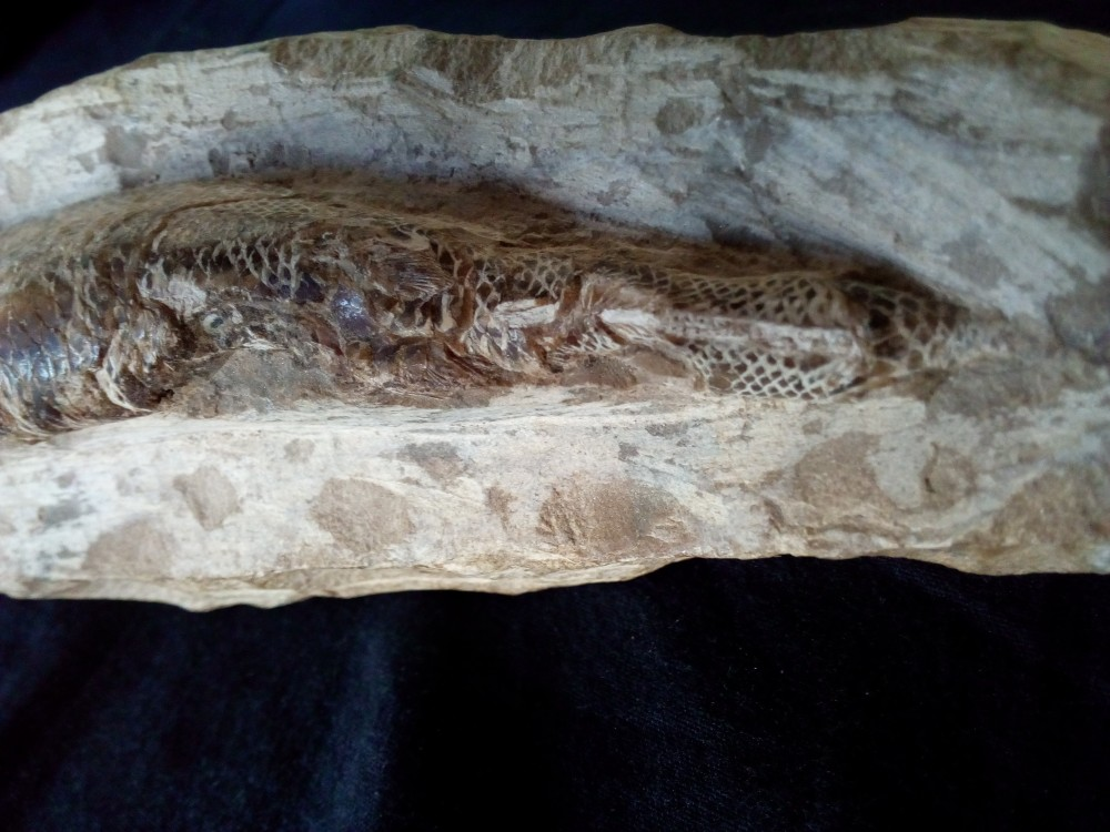 fossile5.jpg