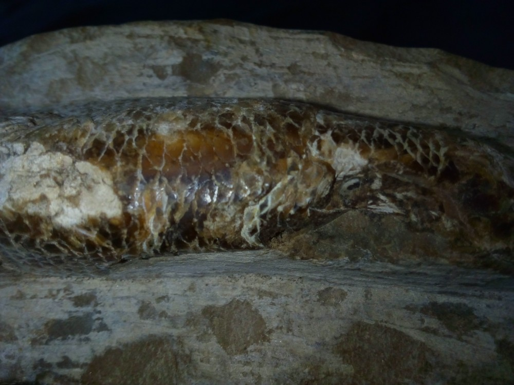 fossile6.jpg