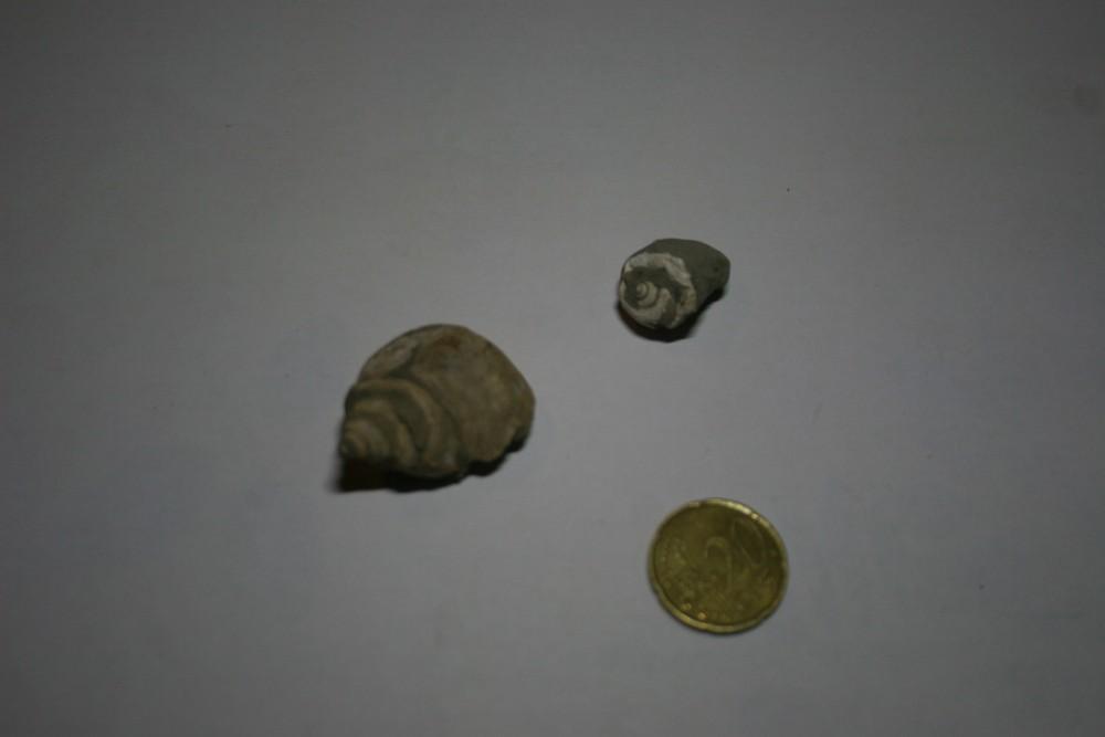 Fossiles ESPERAZA 008.JPG
