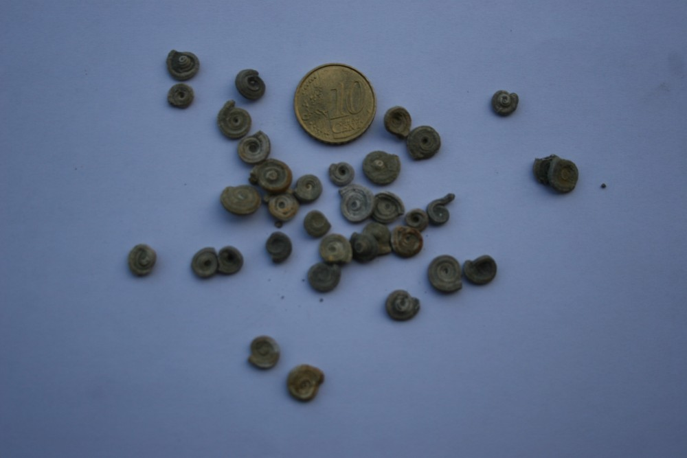 500498168_FossilesESPERAZA002.thumb.JPG.380ab5f15fd2f15f365968603c11c1a5.JPG