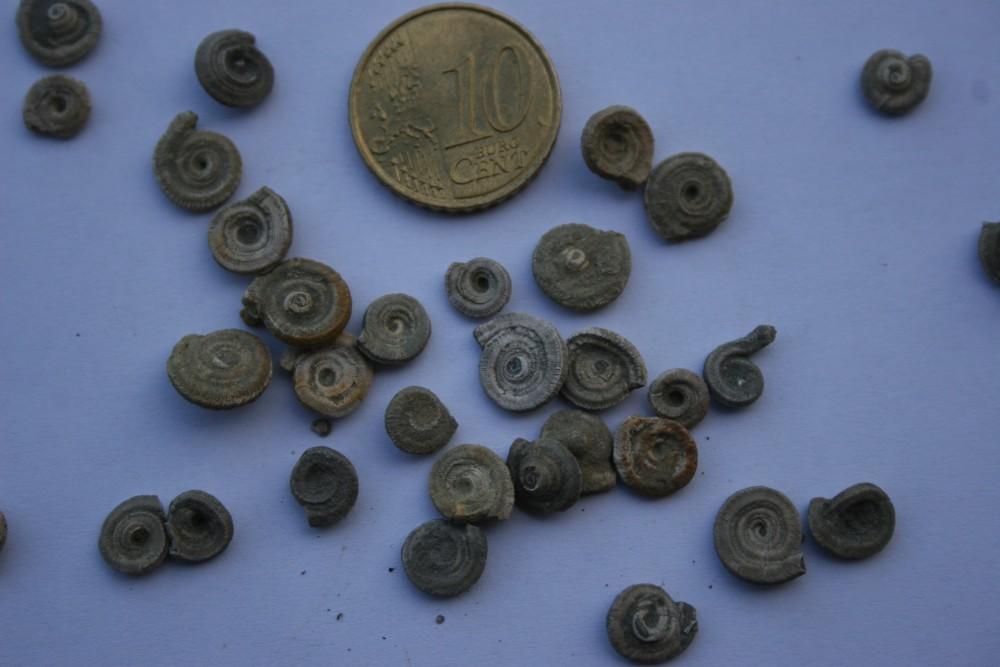 Fossiles ESPERAZA 003.JPG