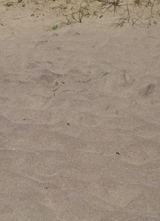 geo sable1.jpg