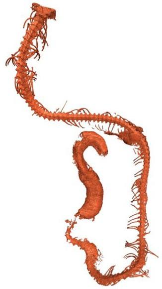 snake_in_amber_skeleton.jpg