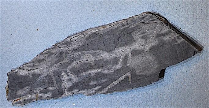 Monograptus priodon 1 Gothlandien ou Silurien.jpg