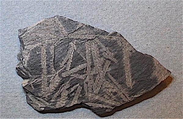 Monograptus priodon 3.jpg