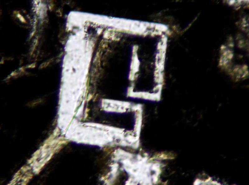 dendritica(21).jpg.b632eef7df48abab3fc3c5affd83f0bf.jpg