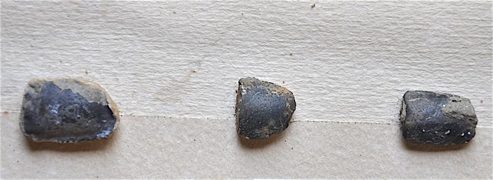 Fragments de pattes de crabes Santonien Sougraigne .JPG