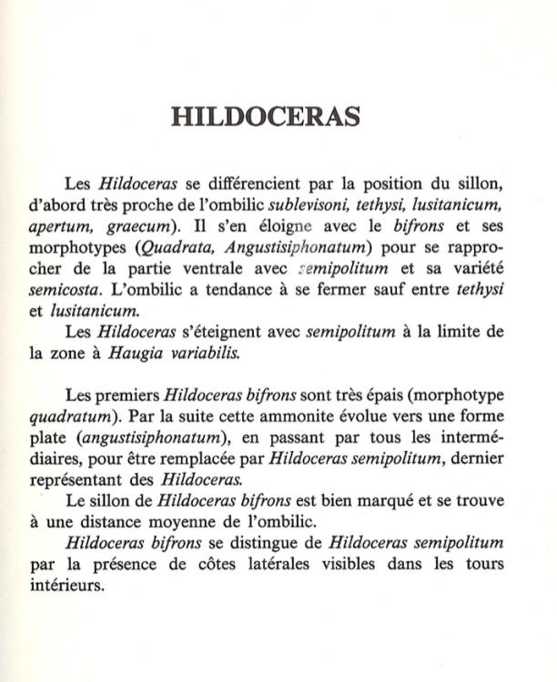Hildoceras.png
