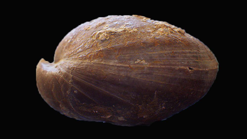 1666065498_specimen1(4).thumb.JPG.a1d77636ff7ca38e2d63acaeea4d4aa7.JPG.ad18c7b2b26d2363e35cb83c81c85862.JPG